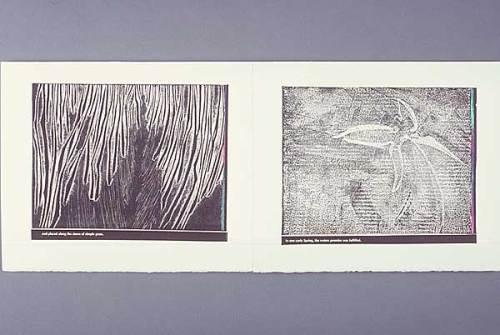 Claire Owen: Bookworks/Turtle Island Press: WATERLINE