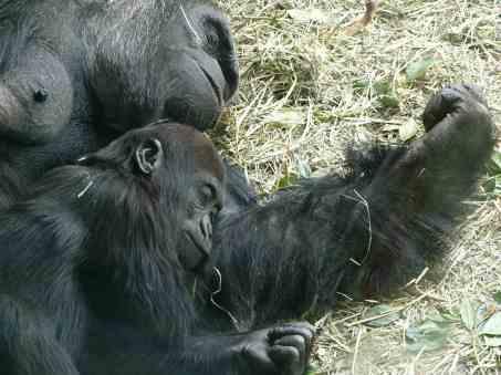 woodland park zoo seattle etats unis