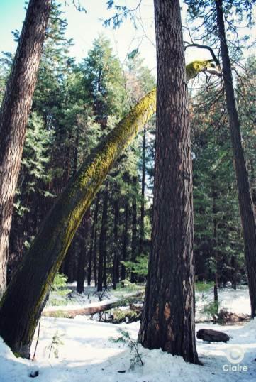 Parc National Yosemite - Etats-Unis