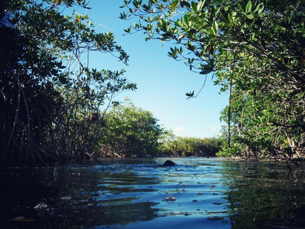 casa cenote mexique tulum