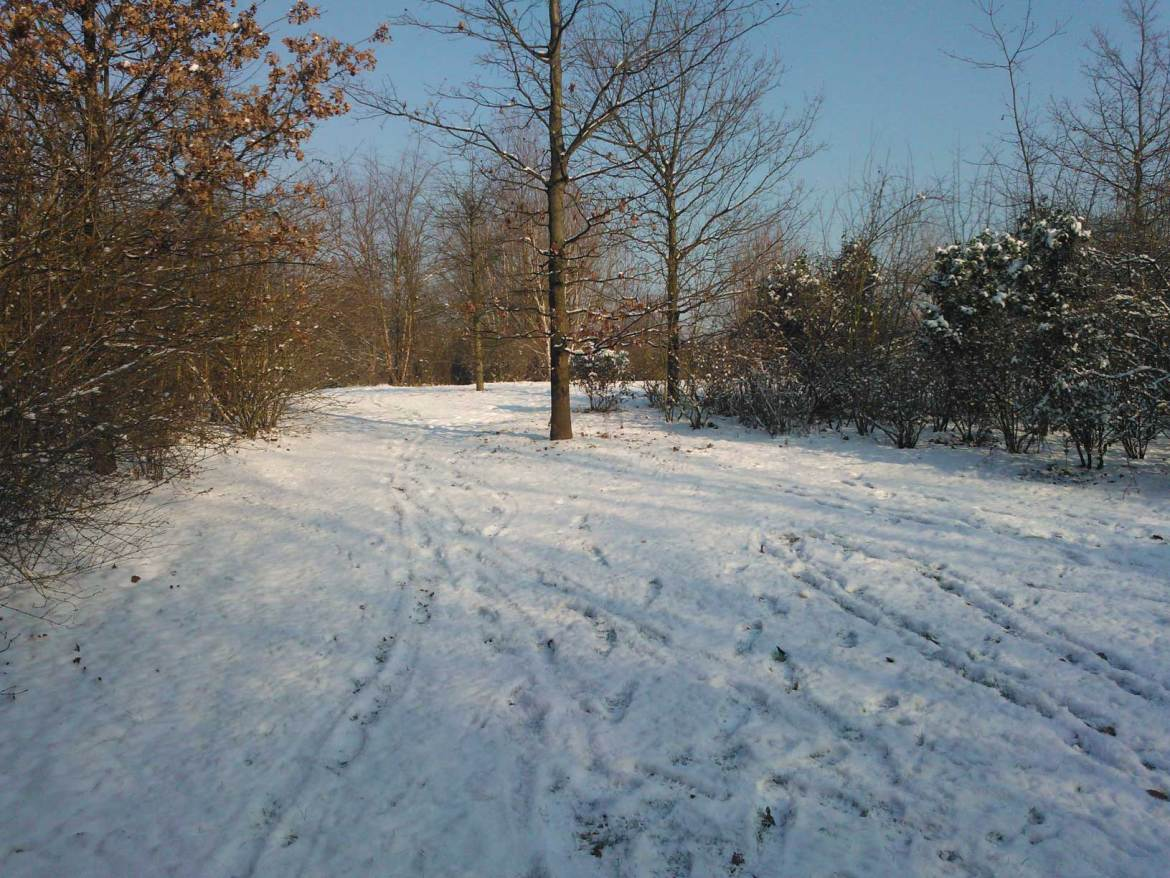 il neige a lille (3)