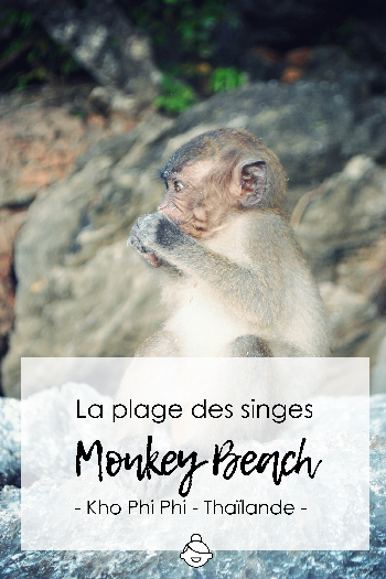 Monkey-beach-thailande-kho-phi-phi-island