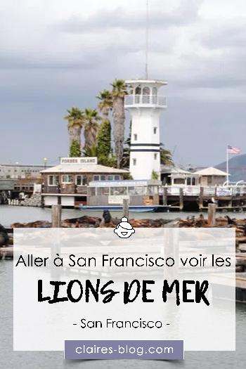 Aller à San Francisco pour aller voir les lions de mer #sanfrancisco #lionsdemer #phoques #voyage #usa #etatsunis
