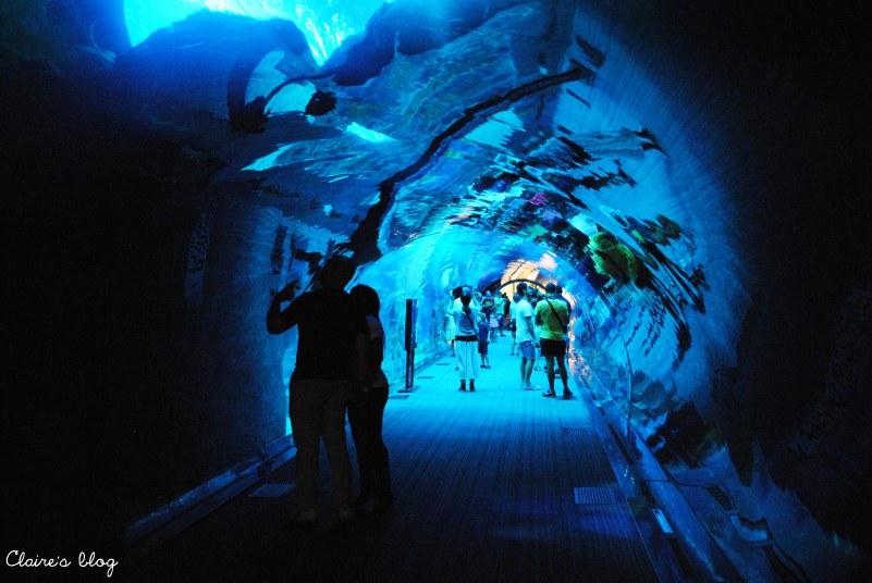 Le plus grand aquarium du monde Dubaï Emirats Arabes