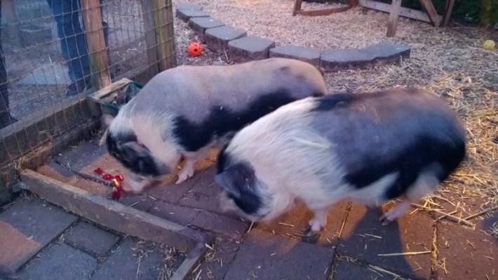 restaurant herb farm seattle washington (4)