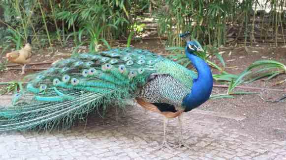 zoo cascais lisbonne portugal