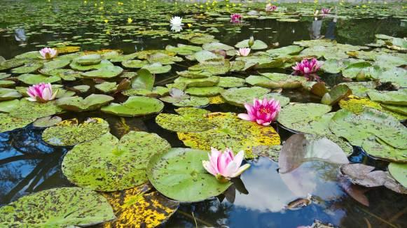 jardin japonais albert kahn paris