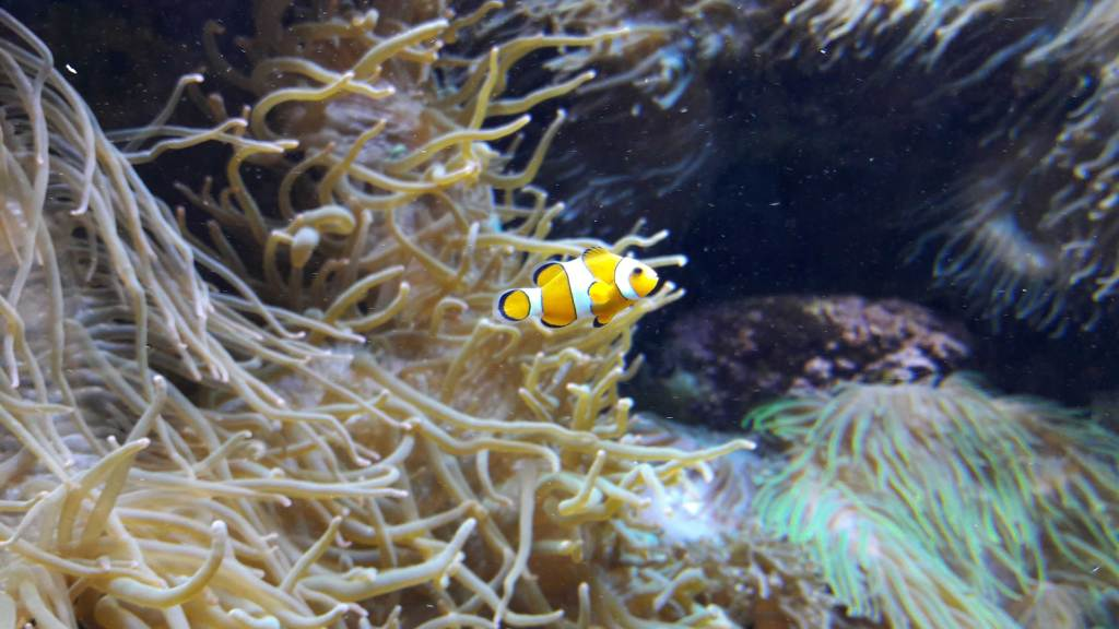 aquarium de brest oceanopolis