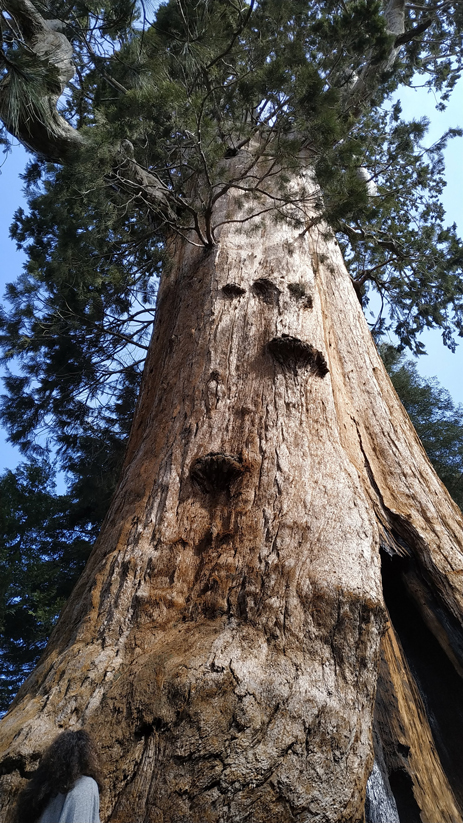 sequoia park etats unis road trip (15)