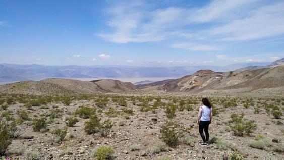 vue sur la vallée de la mort avec cactus