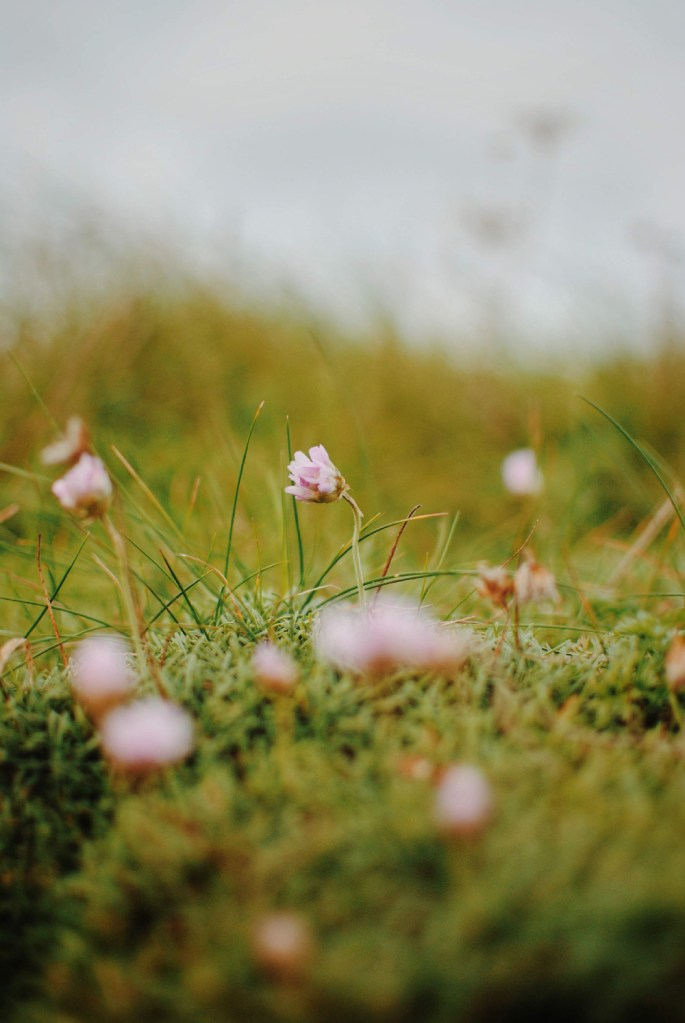 flore ile d'ouessant bretagne