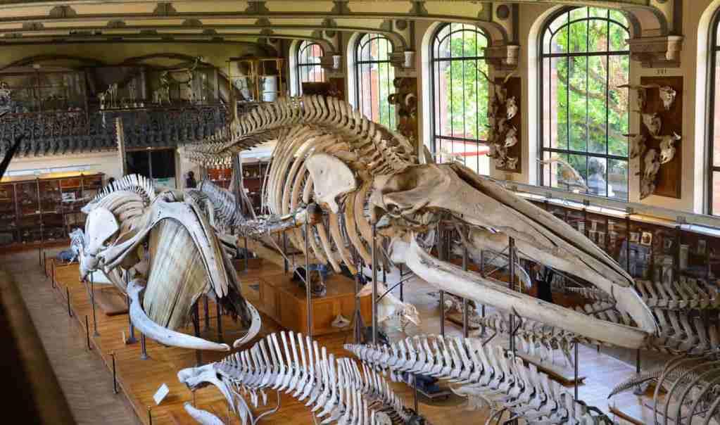 grande galerie de l'évolution musée histoire naturelle
