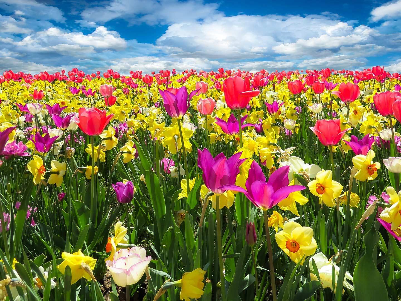 springbreak_1440x1080