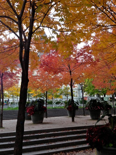 Rainbow trees in Place Jacques-Cartier