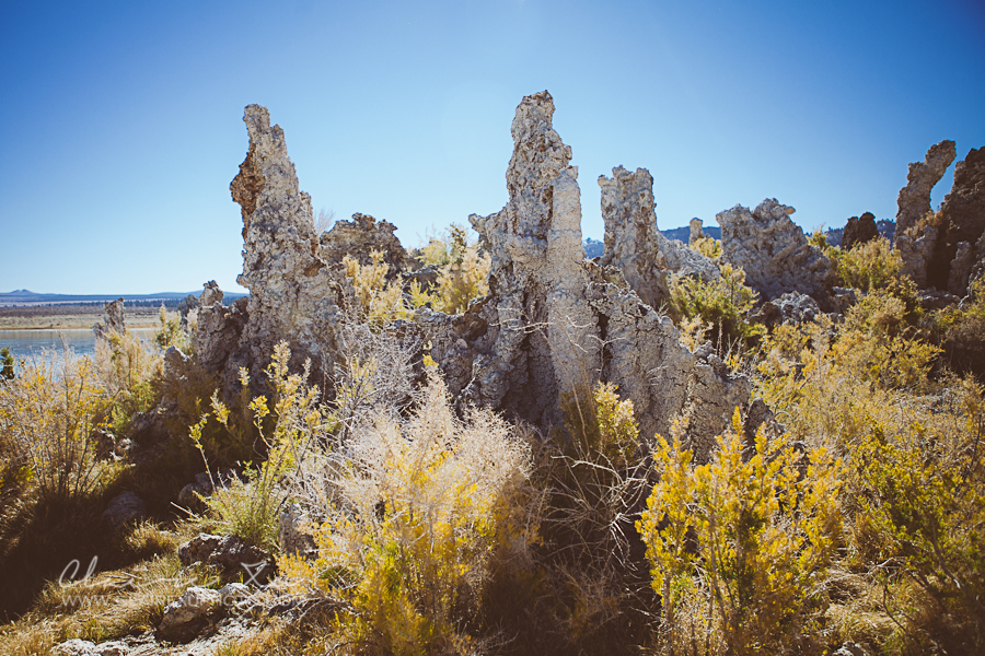 Eastern_Sierra_Fall_Mono_Lake_Engagement-01