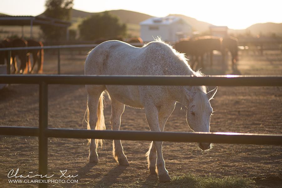 Rocking_K_Ranch-13