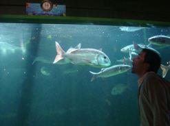 Aquarium de Noirmoutier