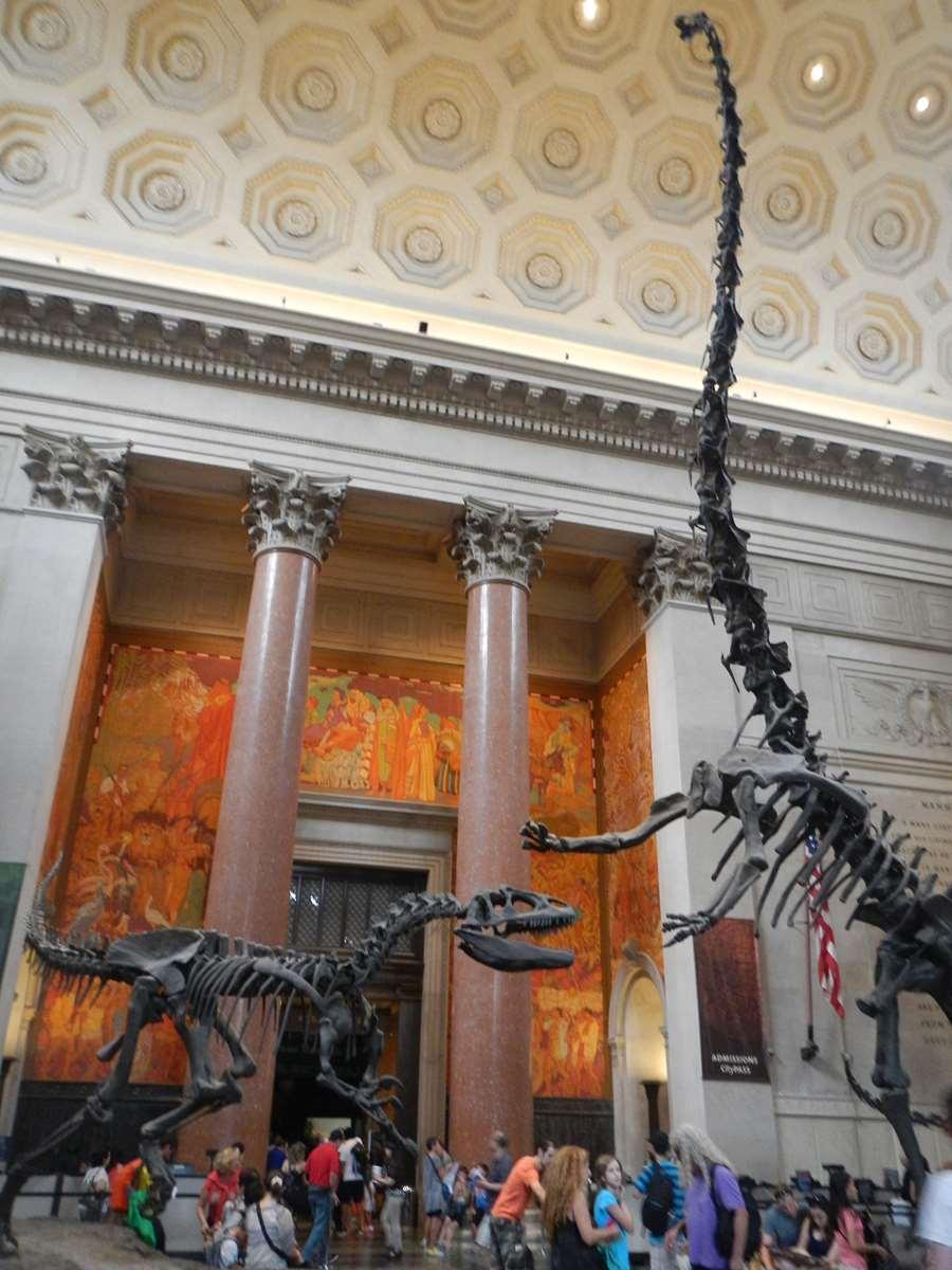 New York - le Musée d'Histoire Naturelle