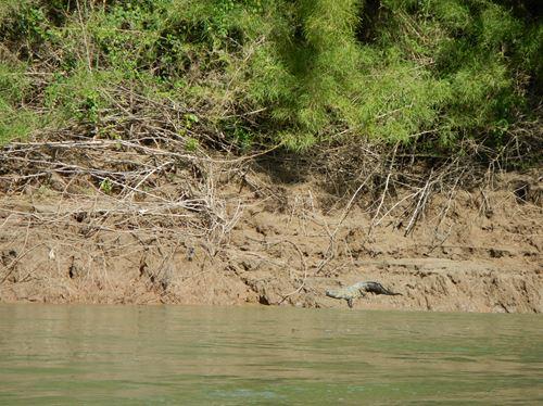 Palenque -- Direction Yaxchilan - Usumacinta