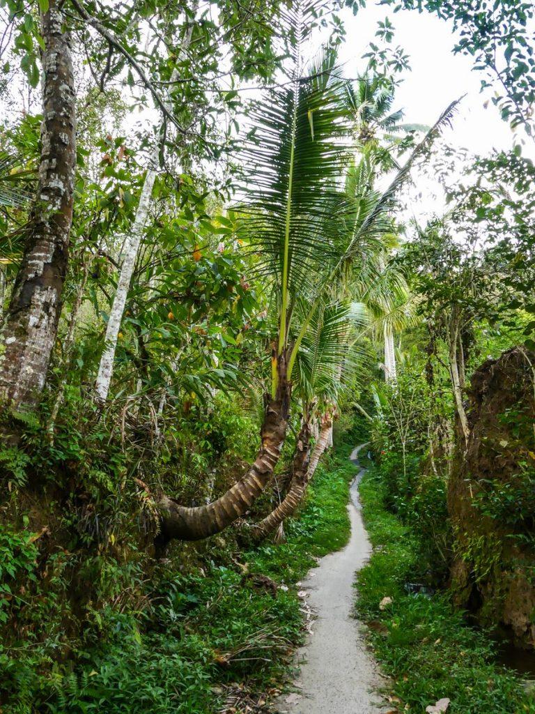 Bali Munduk rizières