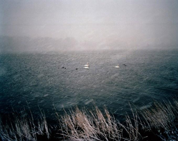 Jesse Burke, Swans
