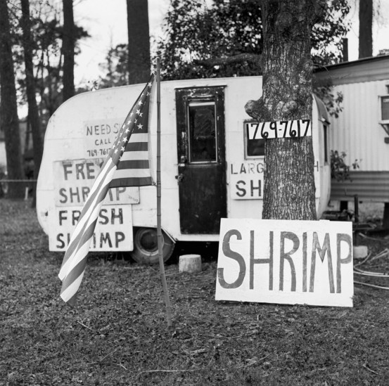 Dave Anderson, Call Dot for Shrimp