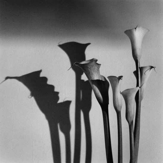 Calla-Lilies_1990_-CT-Jean