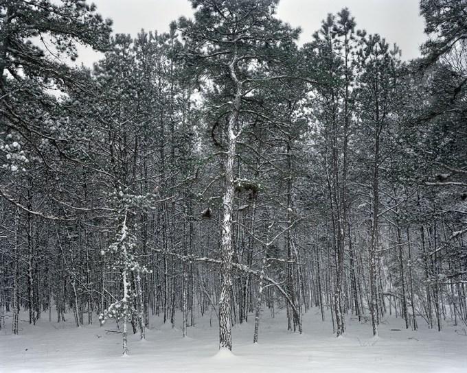 Nicole Schwartz, Untitled (Backyard, snow covered)
