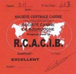 """Carton """"RCACIB"""" pour Jersey du Clan des Gladiateurs lors de l'Exposition Canine Internationale de Dijon 2016."""
