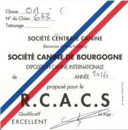 """Carton """"RCACS"""" pour Jersey du Clan des Gladiateurs lors de l'Exposition Canine Internationale de Dijon 2016"""