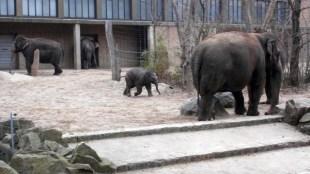 1803 Elefanten 61 600