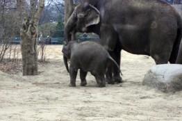 1803 Elefanten 64 600