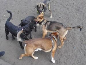 Team-Wusel-Hund