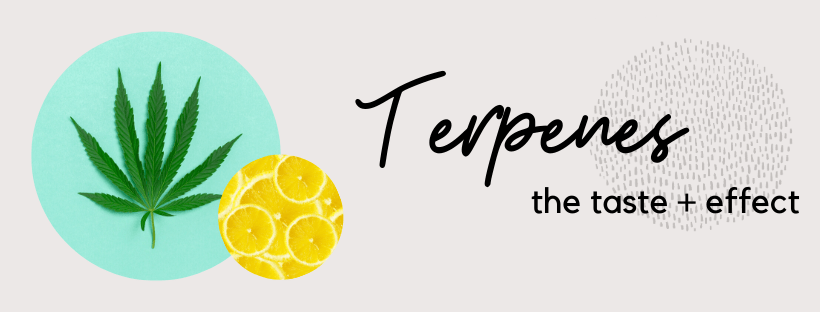 Different Types of Terpenes Found in Hemp