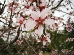 ametller florit