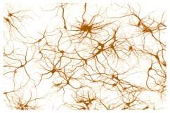 bio-neurones