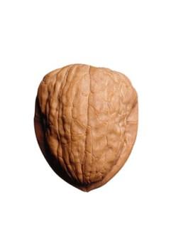textura-walnut