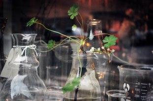 IMG_6366-glass