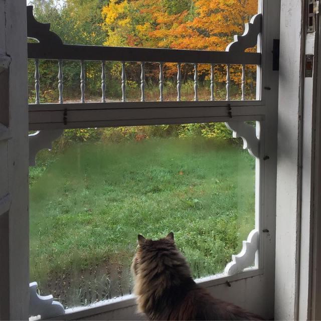 Morning patrol catsofinstagram