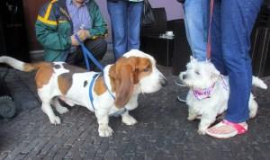 Daisy making a new friend