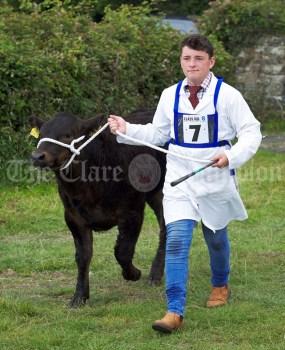 Aidan Kinahan of Kilfinan leads out his beast at Kildysart Show. Photograph by John Kelly
