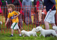 A determined looking Donncha O Brien making his way around the parade ring at Kildysart Show. Photograph by John Kelly