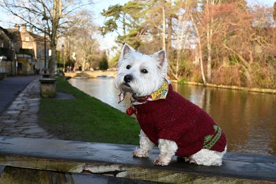 Daisy posing on the bridge in Bourton-on-the-Water.