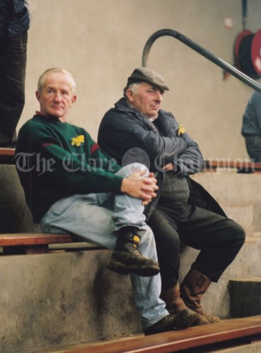 PJ Bermingham and Michael Moloney attending Ennis Mart this week. Photograph by Eamon Ward