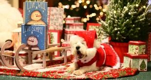 Happy Howly Christmas everyone.