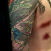 Detail - Waratah and blue wren sleeve tattoo