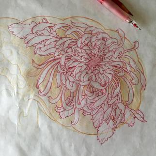 Preliminary sketch of a chrysanthemum flower