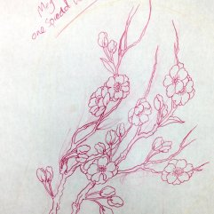 Sketch of cherry blossoms