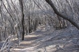 The 'Not So' Dead Forest