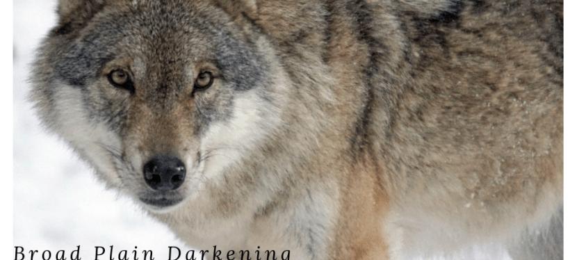 Broad Plain Darkening (Pale #2)